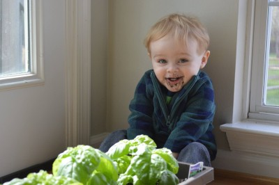 a toddler making parenting difficult by eating dirt from potted plants